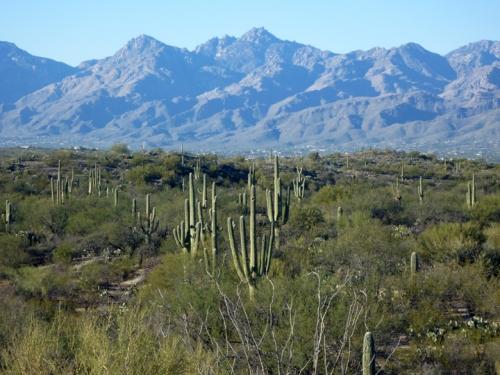 Tucson245