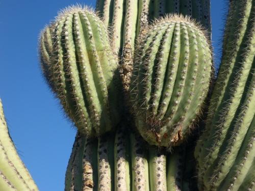 Tucson252