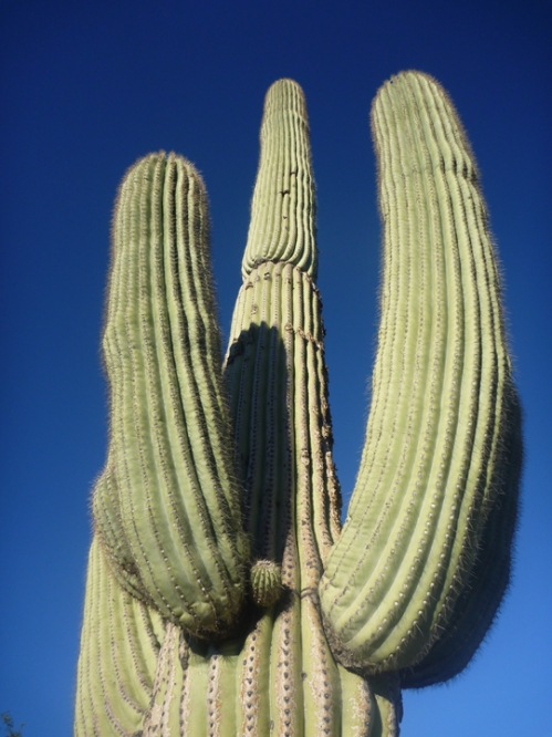 Tucson254
