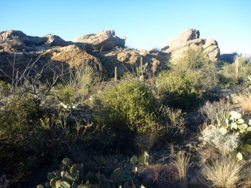 Tucson257