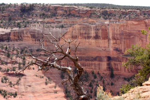 CanyondeChelly4516