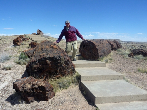 PetrifiedForest0517