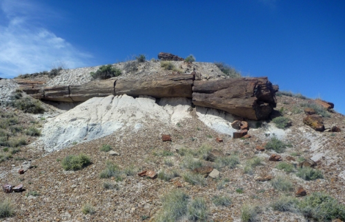 PetrifiedForest0518