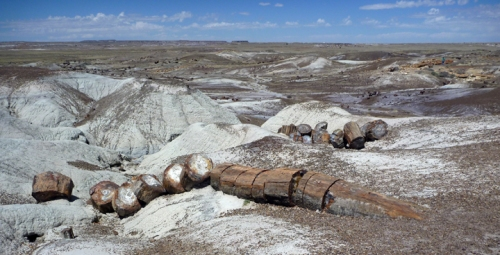 PetrifiedForest0529