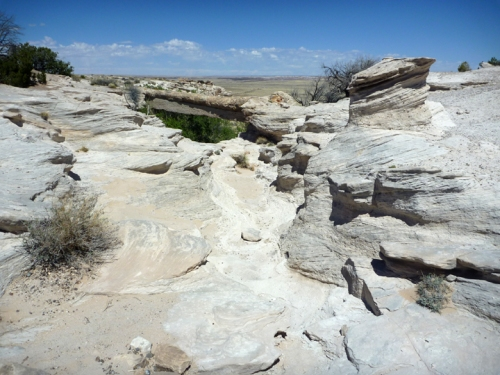 PetrifiedForest0551