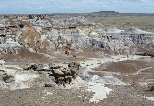 PetrifiedForest0556