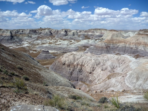 PetrifiedForest0577