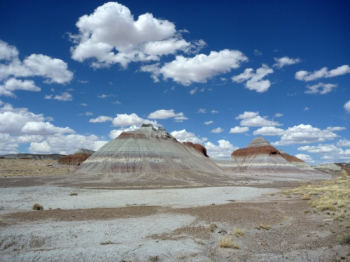 PetrifiedForest0578