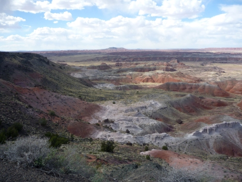 PetrifiedForest0592