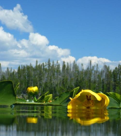 YellowstoneLewisLake0022
