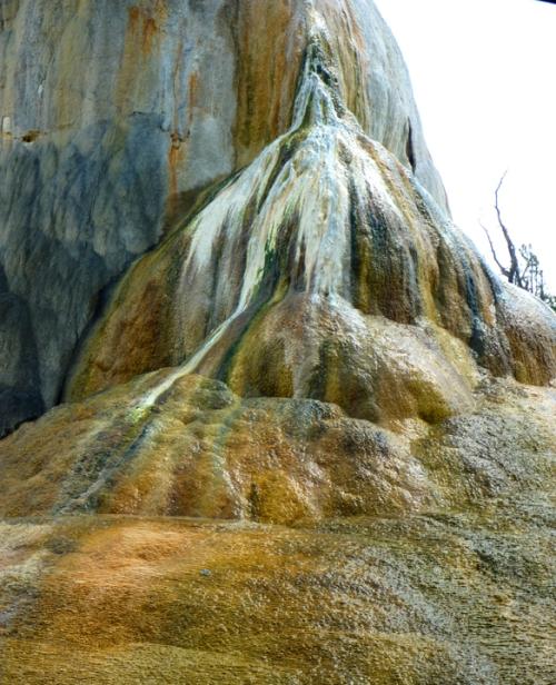 YellowstoneMammothHotSprings0527