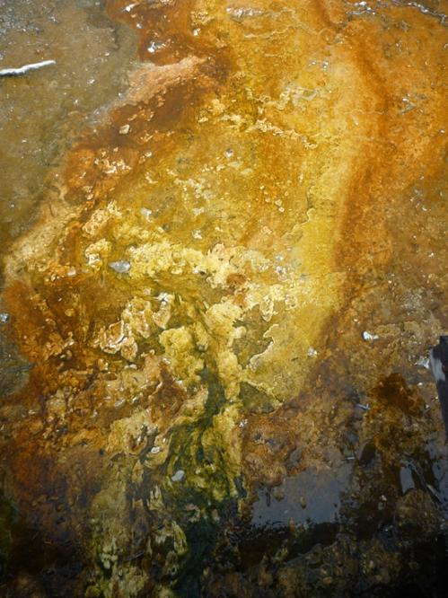 YellowstoneWestThumb0054