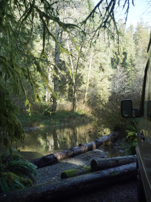 RedwoodsNP0641