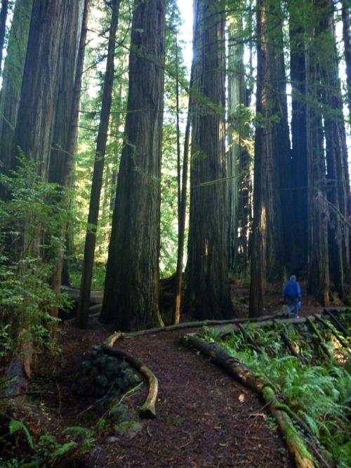 RedwoodsNP0645
