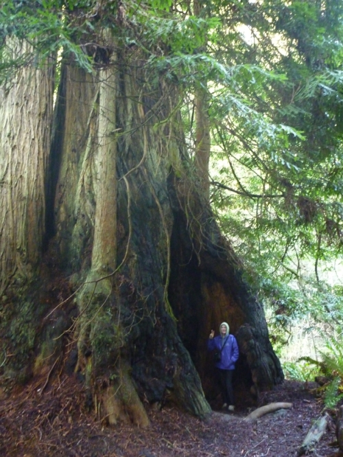 RedwoodsNP0650