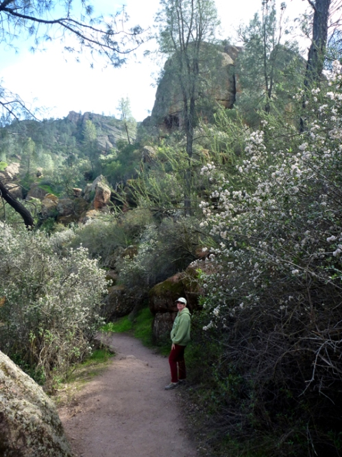 Pinnacles0314