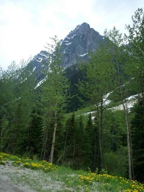 GlacierNP0969