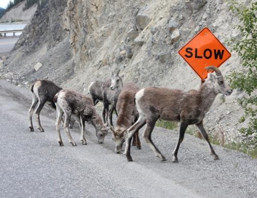 AlaskaHwy5867