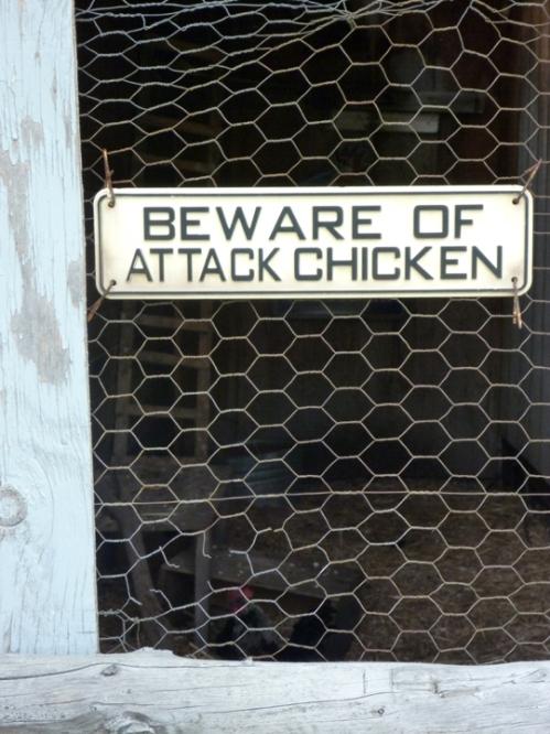 Chicken0039