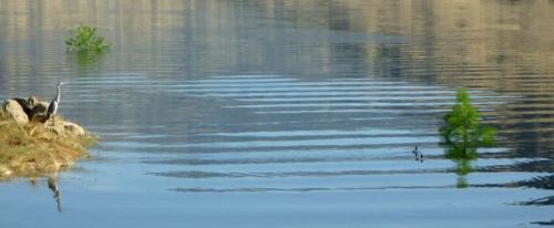 LakeKaweah0319