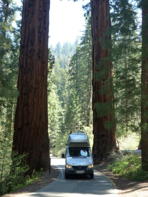SequoiaNP0341