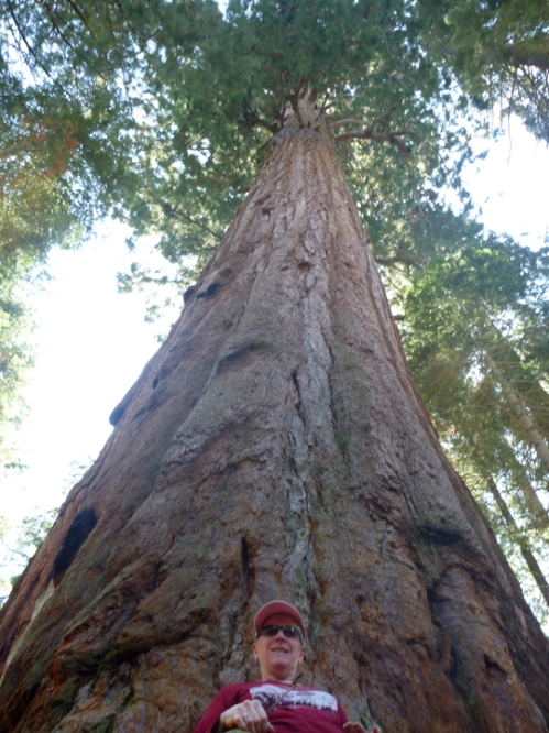 SequoiaNP0345
