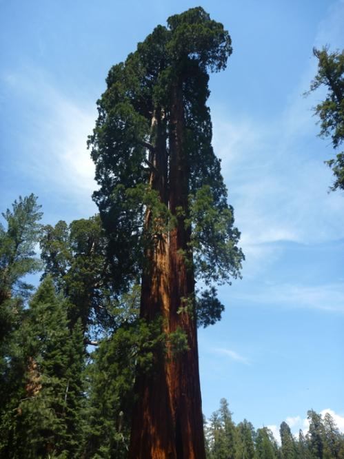 SequoiaNP0355