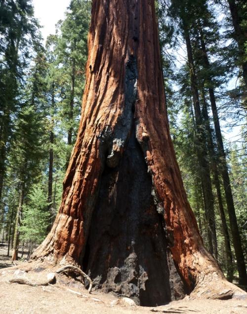 SequoiaNP0363