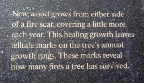 SequoiaNP0364