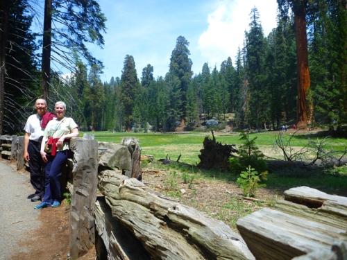 SequoiaNP0368