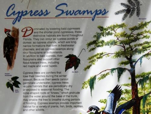 bigcypress2012